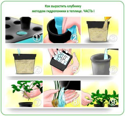 Выращивание клубники методом гидропоники: 1-й способ