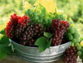 Виноград в Беларуси