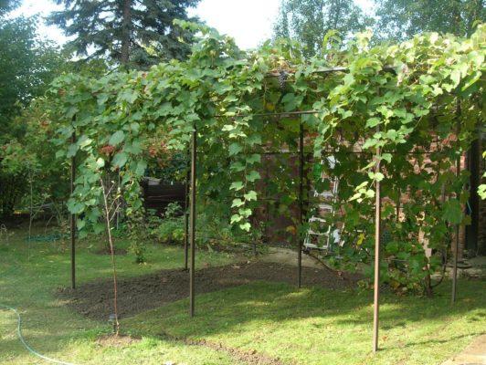Участок под виноград