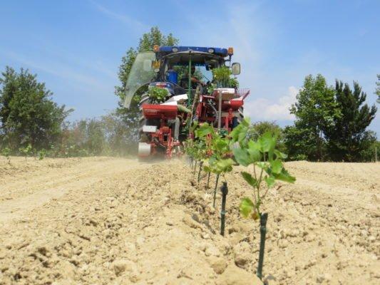 Использование сельхозтехники при посадке винограда