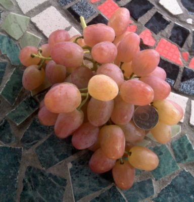 ягоды винограда Ливия