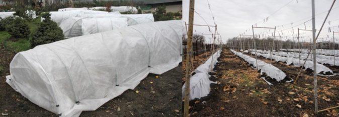 Каркасное укрытие винограда