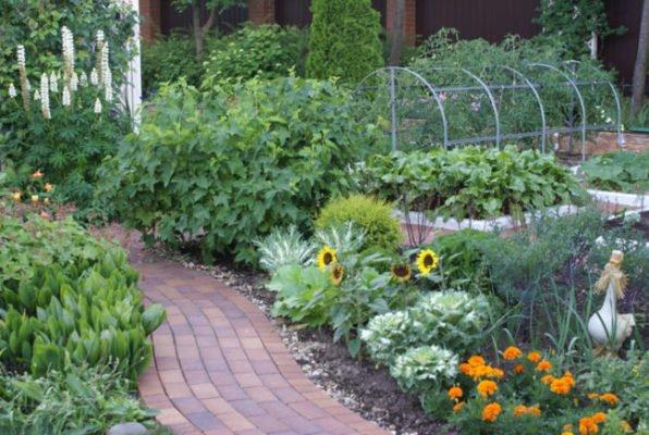 Малина в саду