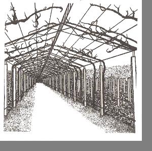 Беседочная формировка в виде тоннеля