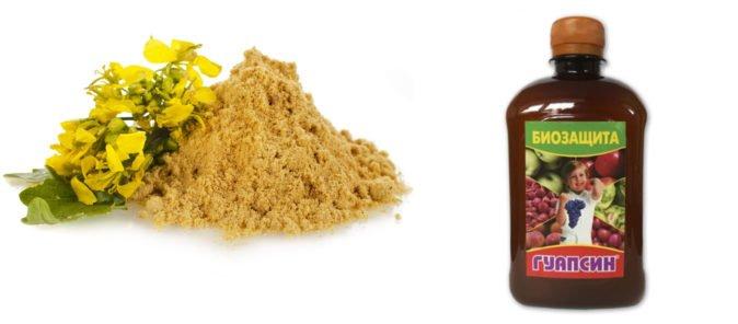 Сухая горчица и гуапсин