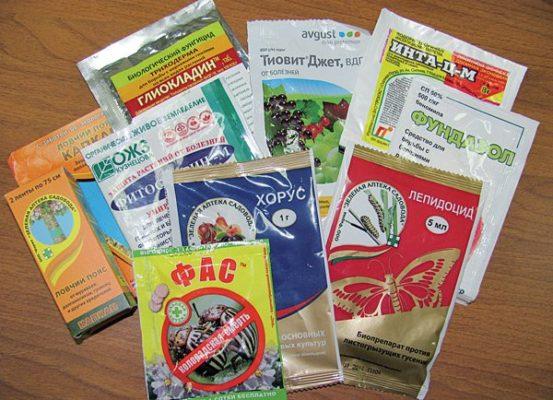 Препараты для обработки смородины