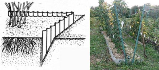 Ограничение разрастания малины с помощью шифера
