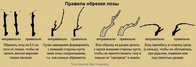 Основные правила обрезки лозы