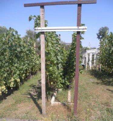 Размещение винограда на двухплоскостной шпалере