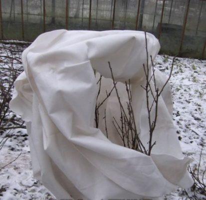 Зимнее укрытие для смородины
