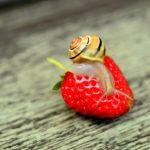 Улитка на ягоде