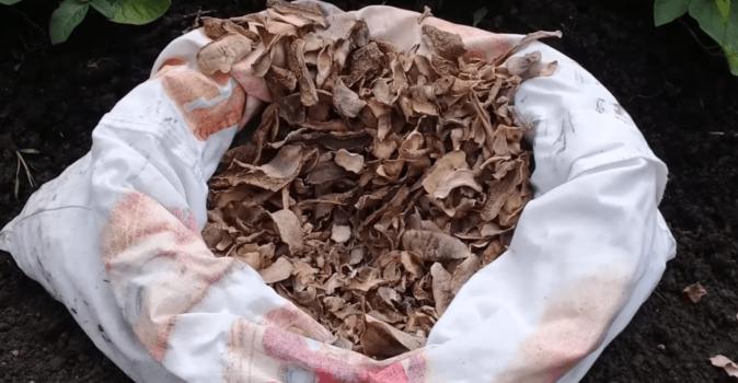 Картофельные очистки, заготовленные путём сушки