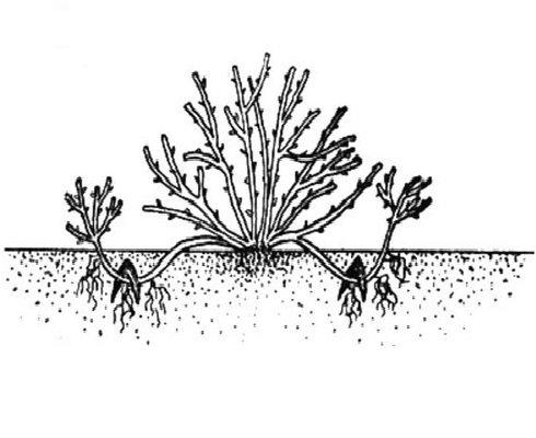 Схема дугообразных отводков