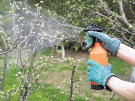 Опрыскивание садовых культур от насекомых