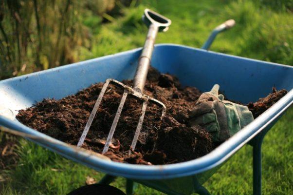 Органическое удобрение для малины