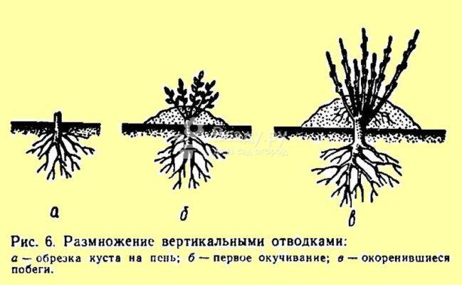 Схема вертикальных отводков