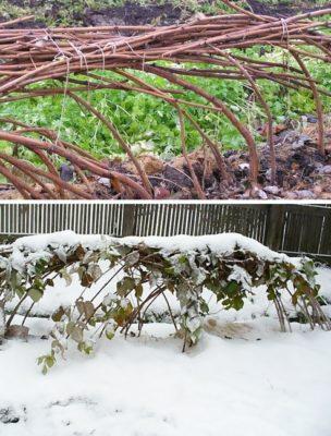 Кусты перед зимой