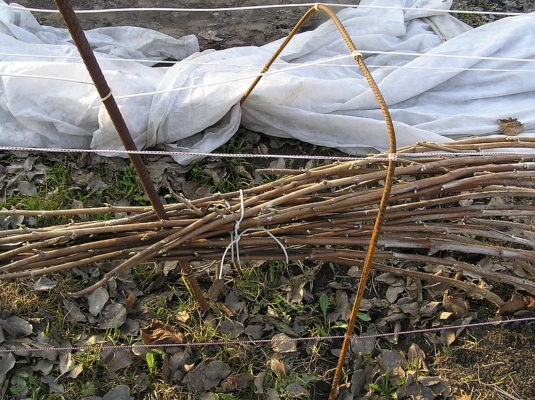 Укрытие малины агроволокном