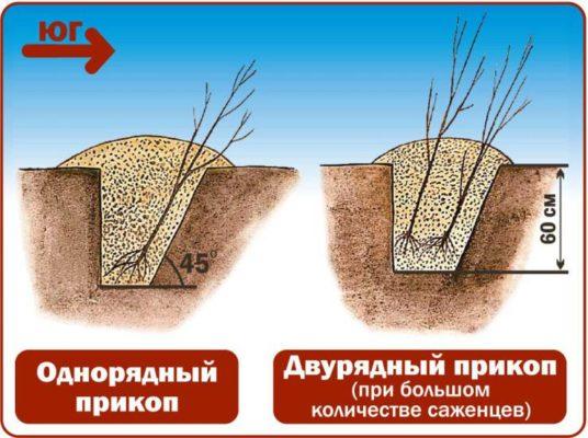 яма для прикопа