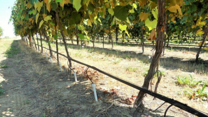 Система для полива винограда