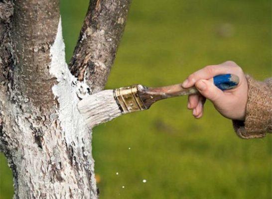 Заботимся о дереве
