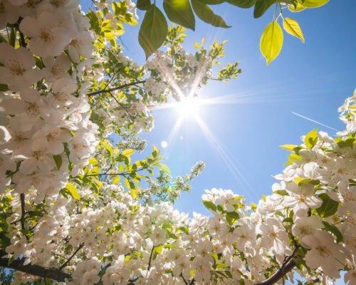 Солнце для вишни