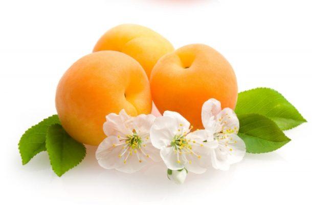 Цветы и плоды абрикоса