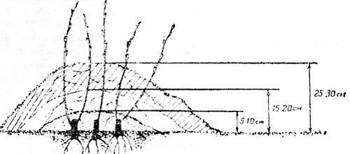 вертикальные отводки