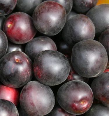 Ягоды абрикоса Чёрный бархат