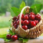 Свежие плоды вишни