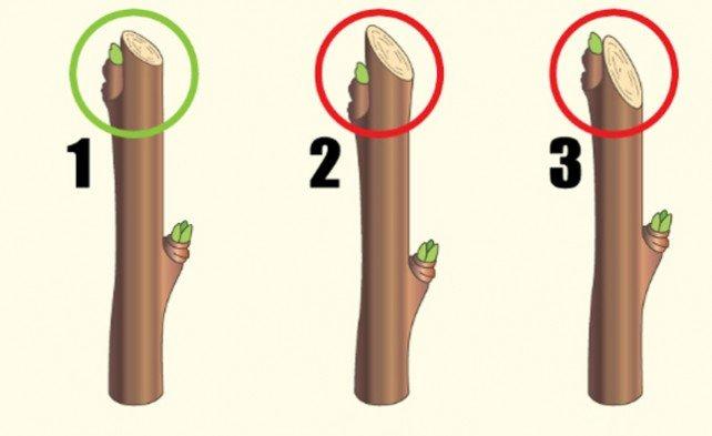 Примеры правильной и неправильной обрезки