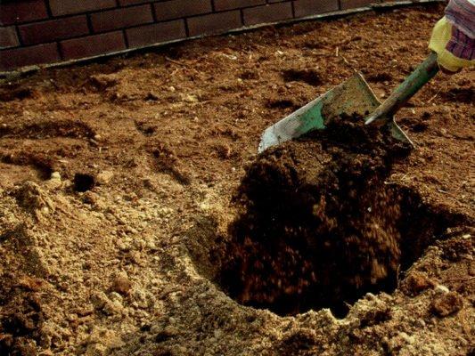 Засыпка питательной смеси в посадочную яму