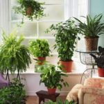 Композиция из домашних растений