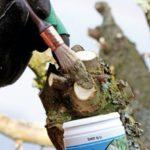 Обработка среза повреждённой части ветви