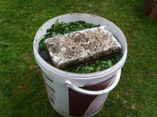 Подготовка травяного настоя