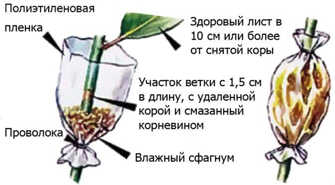 Схема воздушного укренения