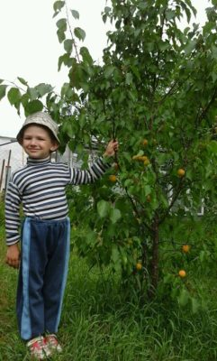 Ребёнок у абрикосового дерева