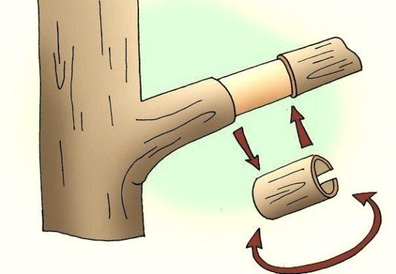 Рисунок кольцевания ветви