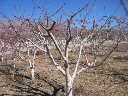 Обрезанные деревья