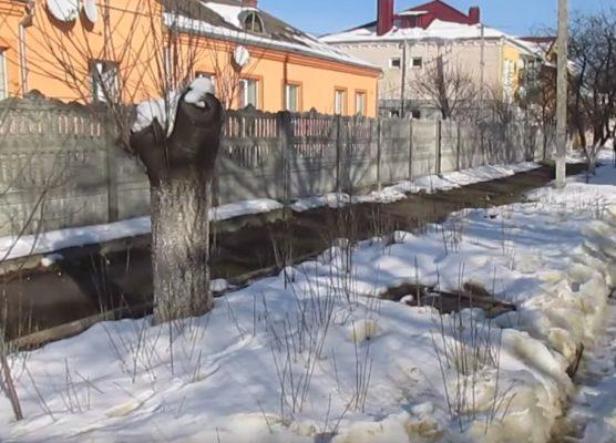 Корневая поросль вишни
