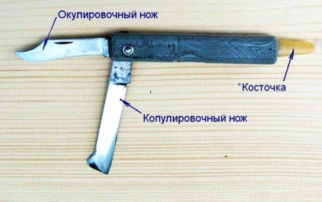Нож для прививок