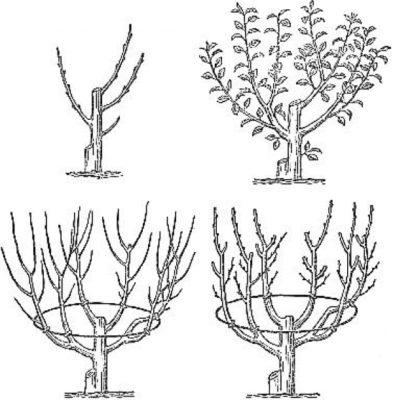 Обрезка в форме вазы