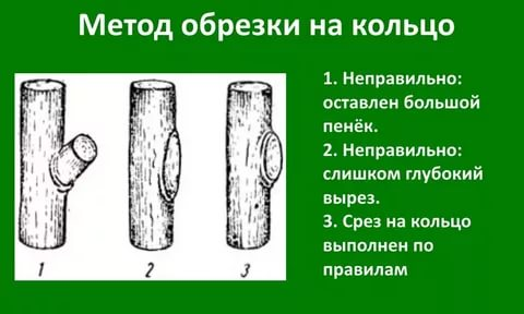 Схема обрезки «на кольцо»