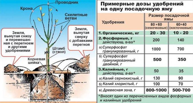 Схема посадки садового дерева