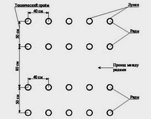 Схема посадки малины Киржач