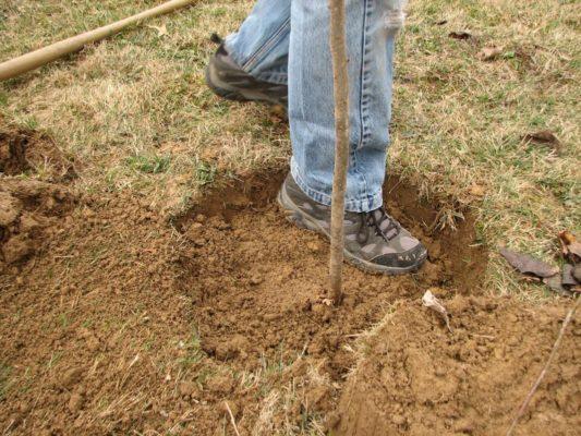 Уплотнение грунта при посадке