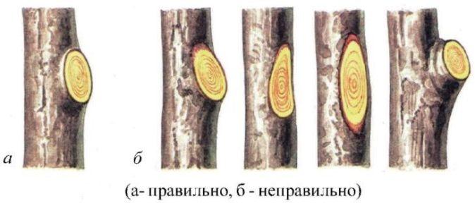 Схема обрезки на кольцо