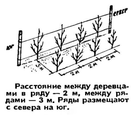 Карликовый сад