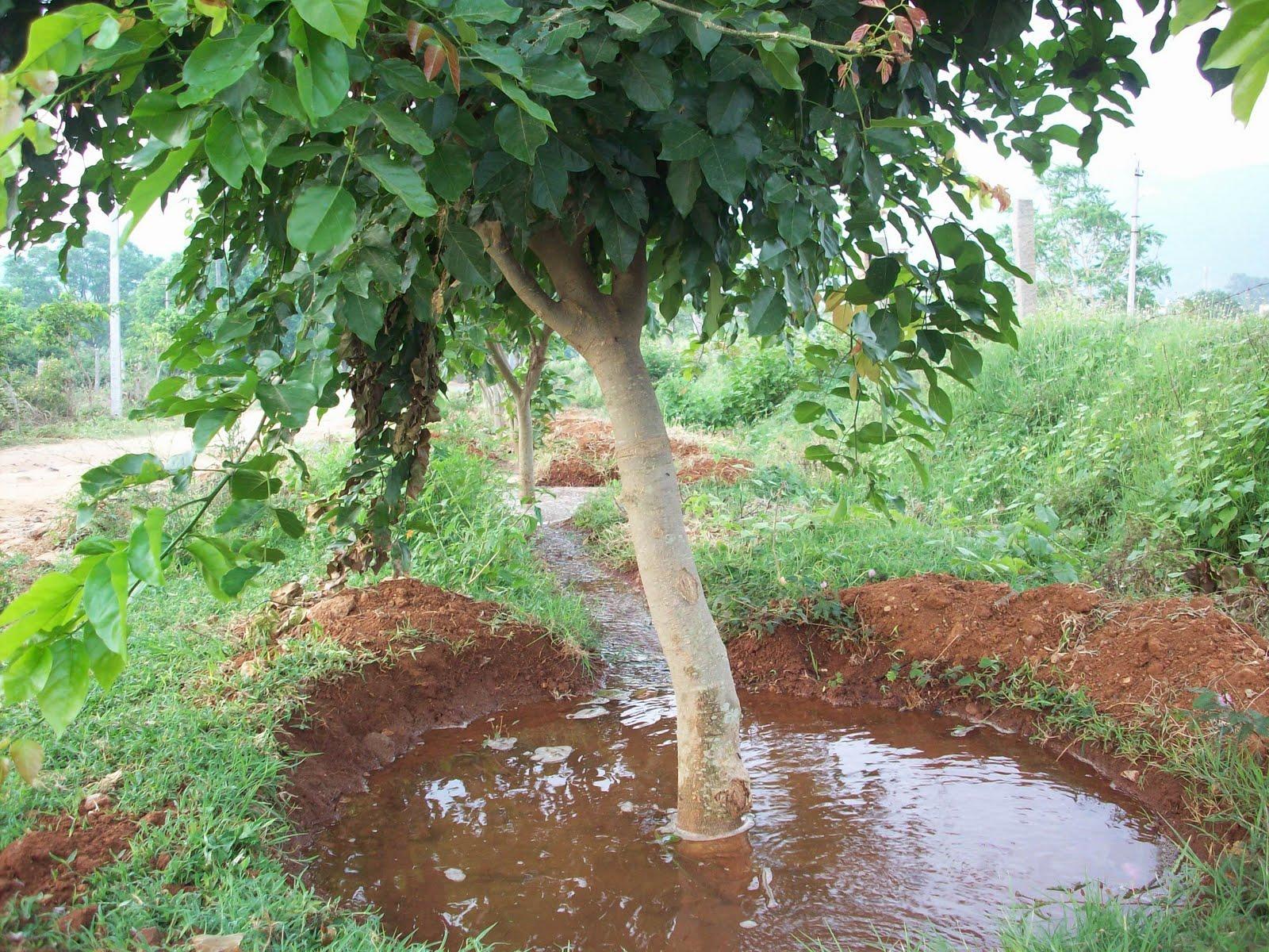 платья деревья при поливе картинки процедуры окрашивания
