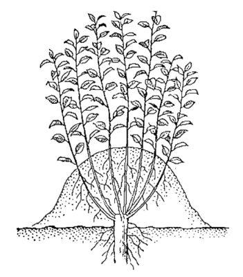 Отводки вертикальные